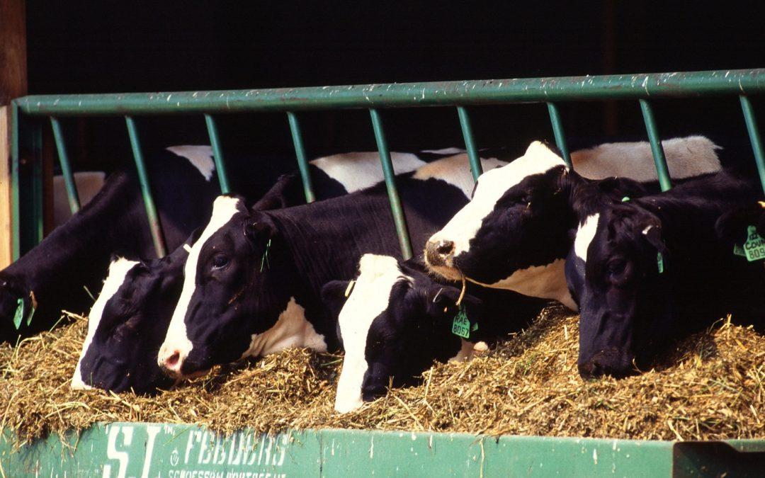 Growth Hormones in Milk Should be Illegal