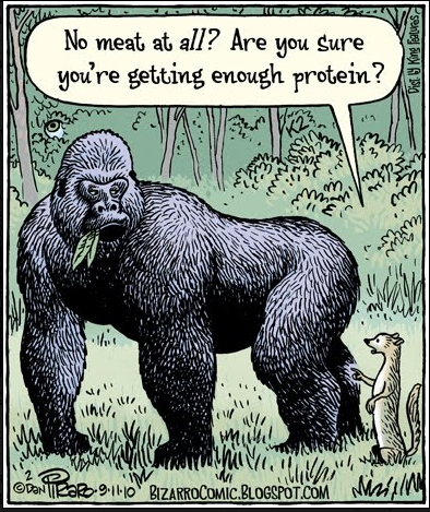 The Beef on Vegan Protein