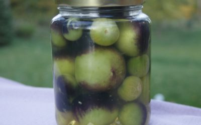 What to Do with Green Tomatoes? Make Pickles!
